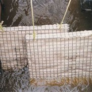 Oil absorbent filters