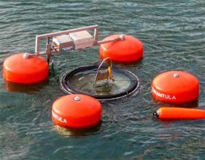 Tarantula high capacity skimmer